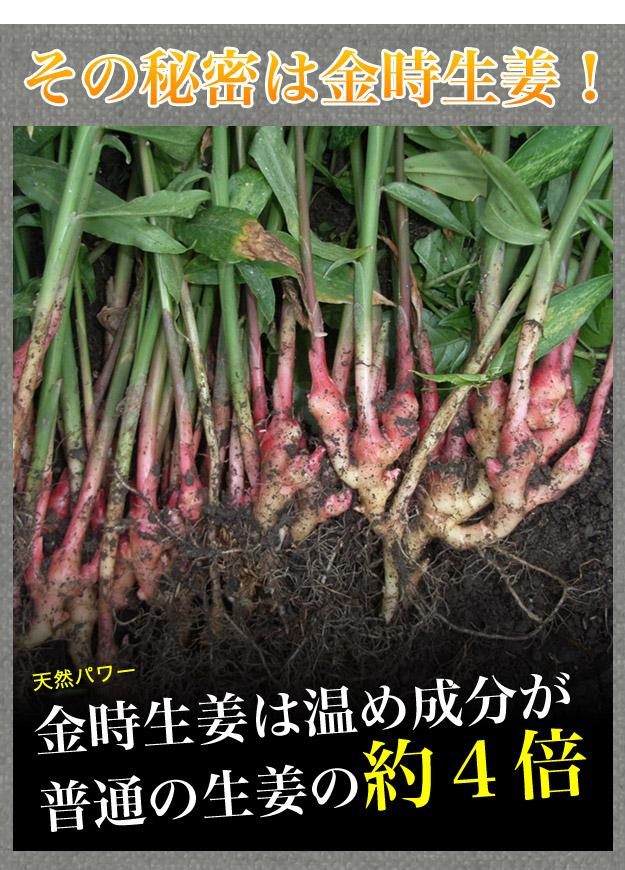 金時生姜は温め成分が普通の生姜の約4倍