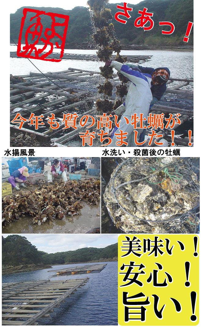水揚・選別・水洗い・殺菌など様々な工程があります。 それぞれの工程において、多くの手作業が必要と なってきます。 よか魚ドットコムでは品質の向上の為に一つ一つ丁寧 に数人で確認しながら行っています。 新鮮で美味しい安心牡蠣(カキ)をお届け出来る様に 努めております。