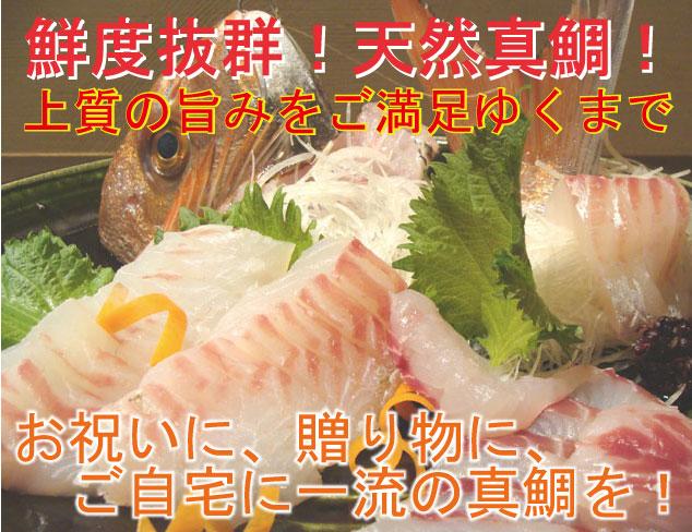 マダイ まだい 真鯛 タイ たい 鯛 天然真鯛