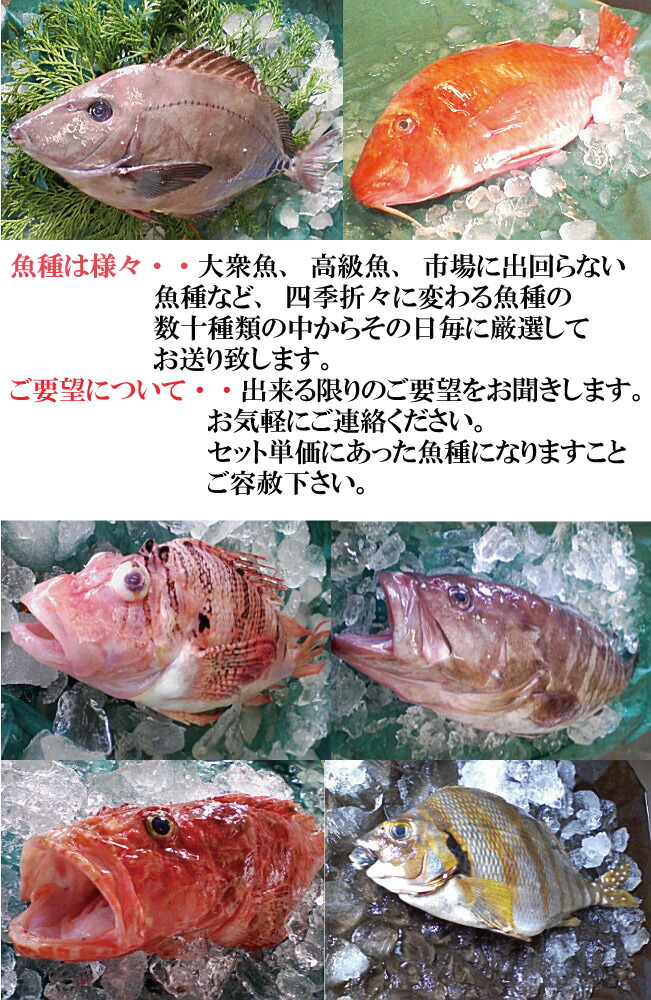 鮮魚 センギョ せんぎょ 焼き魚 煮魚 刺身 サシミ さしみ 魚 サカナ さかな