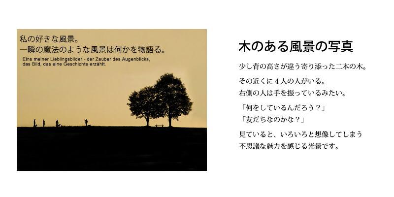 木のある風景の写真