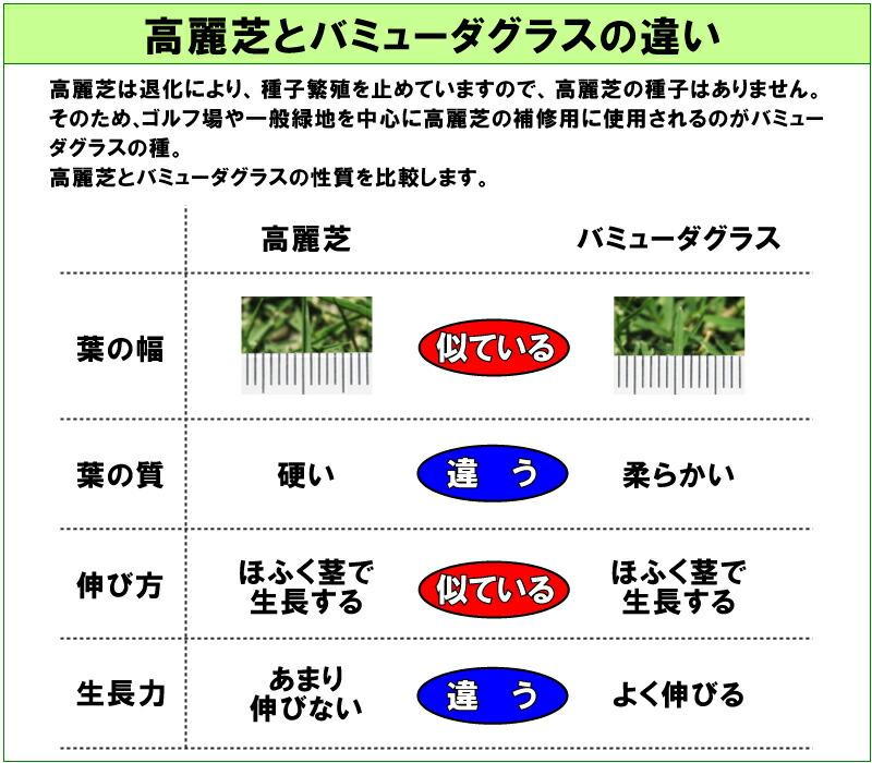 ティフトン芝や高麗芝(コウライシバ)の種での補修に使用される芝生