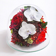 胡蝶蘭ガラスドーム2L