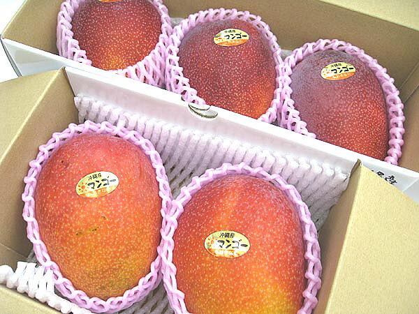 大き目のマンゴー2〜3個入り