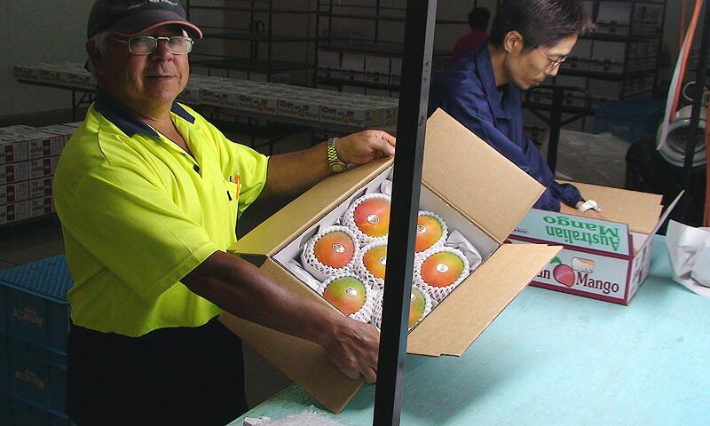 アメリカのオレンジ農園で、日本人オーナーは、渡辺さんだけ!