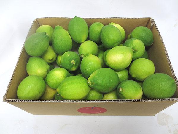 静岡産ハウス栽培グリーンレモン大箱(5キロ)