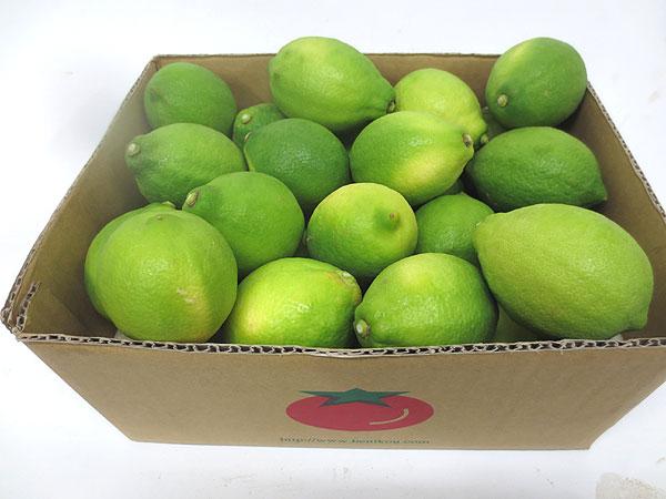 静岡産ハウス栽培グリーンレモン中箱(3キロ)
