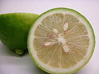 国産レモンの輪切り