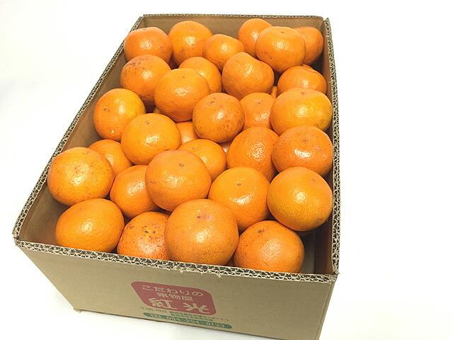紅光イチオシミカン 5キロ箱