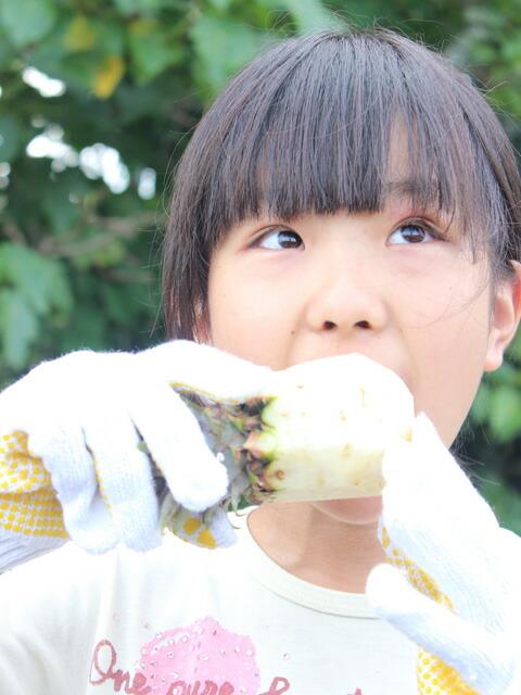 ぜひ一度お召し上がりください。本当においしい沖縄・西表島のスナックパイン!