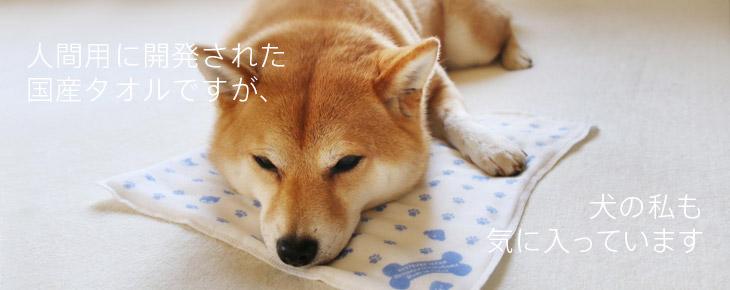 人間用に開発された国産タオルですが、犬の私も気に入っています