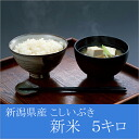 Strainer Ibuki 24 years from 5 kg 5 kg in the Niigata Niigata Prefecture produced gift H