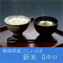 Strainer Ibuki 24 years from 5 kg 5 kg in the Niigata Niigata Prefecture produced gift H