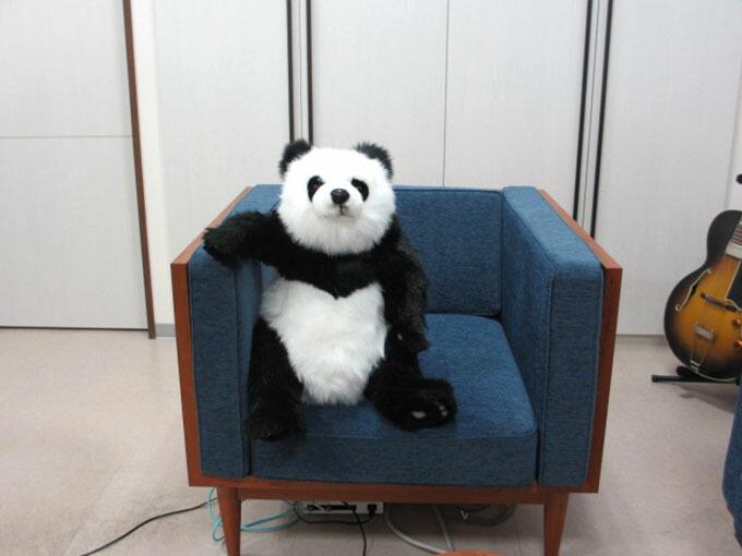 它是一个现实的动物服装汉萨大熊猫 [hansa] [5750].