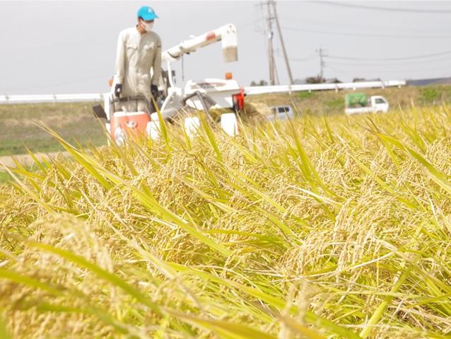 元田農園の畑