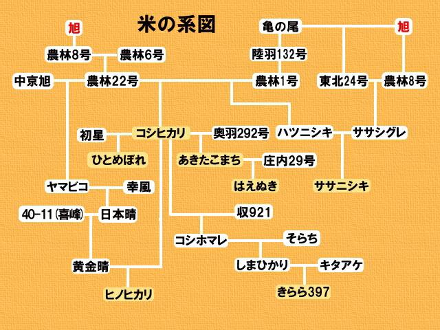 旭1号の家系図