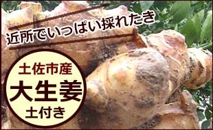 高知産土付生姜