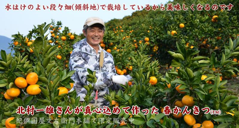 有田みかん豊作会・北村さんのデコポン