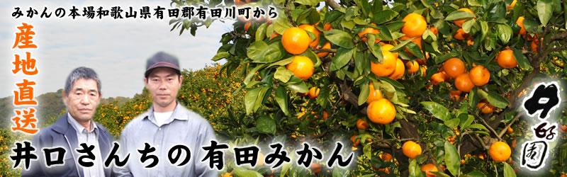井好園 井口さんちの有田みかん