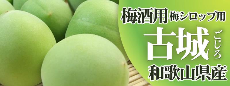 古城品種 梅酒梅シロップ用 和歌山県産