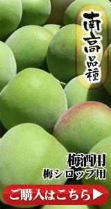 南高品種 梅酒用梅シロップ用
