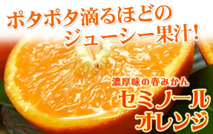 セミノールオレンジ(濃厚・多果汁)