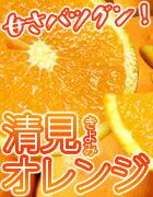 春みかん・清見オレンジ
