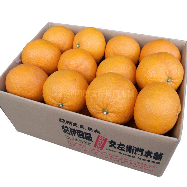 和歌山自治州纪州有田春天橙色春天柑橘属水果