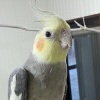鳥さんの写真