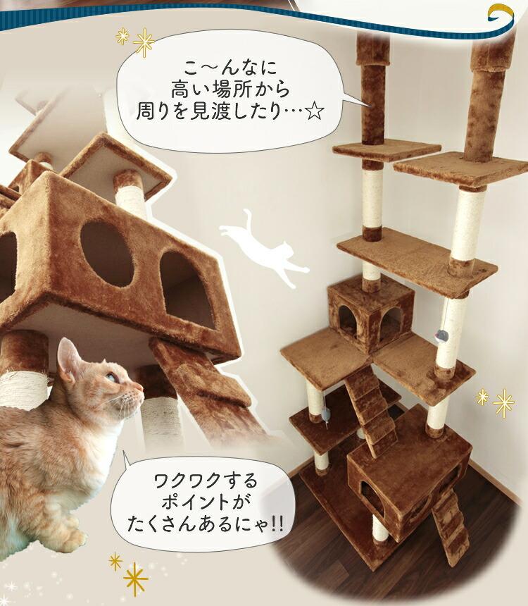Cat Cabinet Video