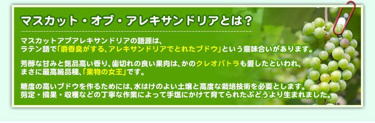 http://image.rakuten.co.jp/cellar/cabinet/00835557/amatista_04.jpg