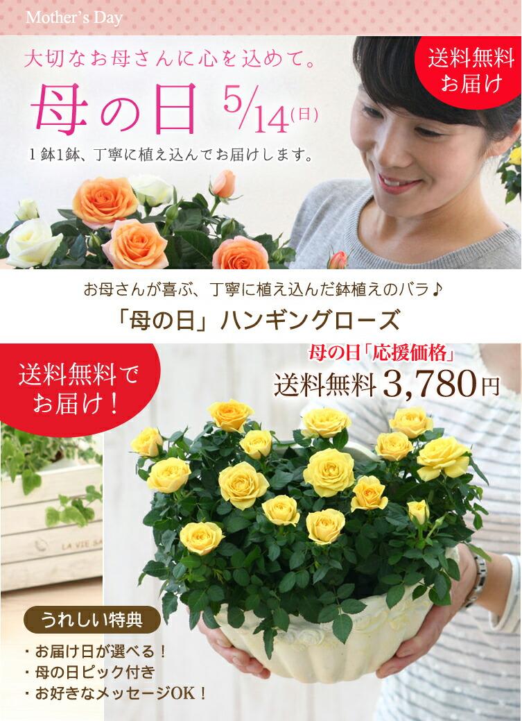 【母の日】送料無料★ハンギングローズ!