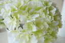 Hydrangea hydrangea flowers cream Green / a bundle (サラハイドレンジア)
