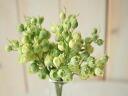 フリルベリー pick (green cream) (3 screws) and