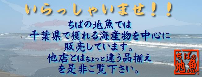 いらっしゃいませ!! ちばの地魚では千葉県で獲れる海産物を中心に販売しています。他店とはちょっと違う品揃えを是非ご覧下さい。