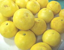 ◆ Tosa Buntan ( roji Pummelos ) ★ your home probably Tan value 10 kg ball number and みはからい (L larger) ★? s low-price 4800 yen.