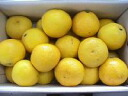 ★ Tosa konatsu (new summer Orange, Sun summer) 5 kg / household ★.