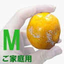 ★! High profile of yamakita Mikan your household size M 5 kg ★ (Mikan has Yamato) * COD fee +210 Yen required
