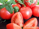 ★ [time sale! > and high sugar content tomato fruit 1 kg Kochi from your home (ball number of Omakase dishes) ★ [ZAO]