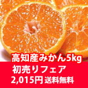 New year's time first sale sale! ★ ◆ local Kochi unshu 5 kg box! ★ 2014. * chilled 105 yen, cod is ¥ 210 requires Bullrings in the farm-fresh sweet oranges! ★