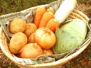 "★Five items of domestic ""a good vegetables"" set ★[ storehouses] (I send it out to fire, a tree, soil)"