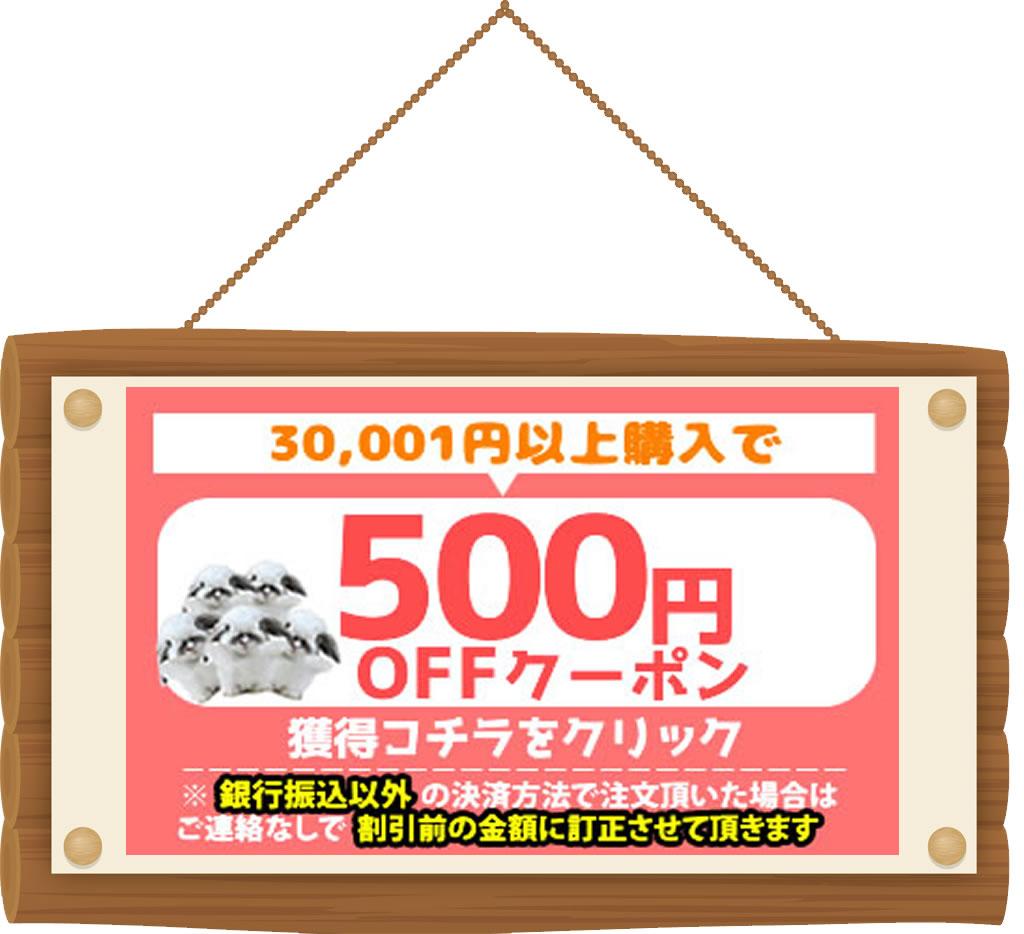 500円OFFクーポンをGET!