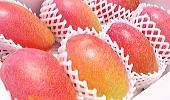 トロピカルフルーツお取り寄せ