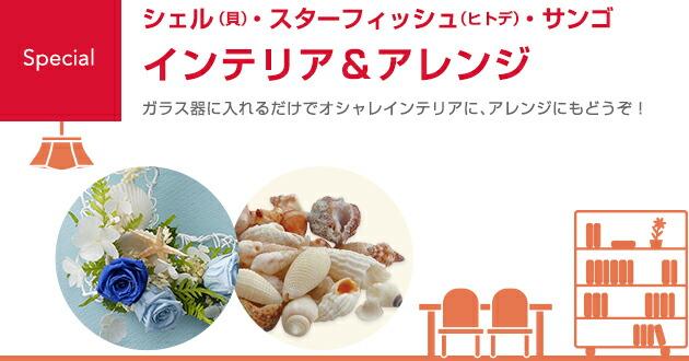 シェル(貝)・スターフィッシュ(ヒトデ)・サンゴ