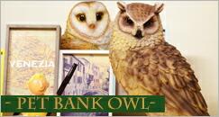 �ڥåȥХ� OWL