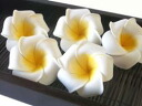 Artificial flower and plumeria fs3gm