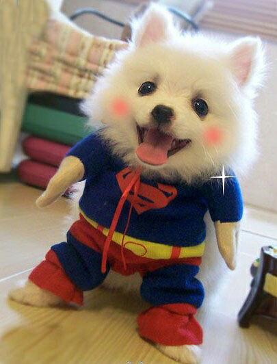 スーパーマン スパイダーマン バットマン コスチューム