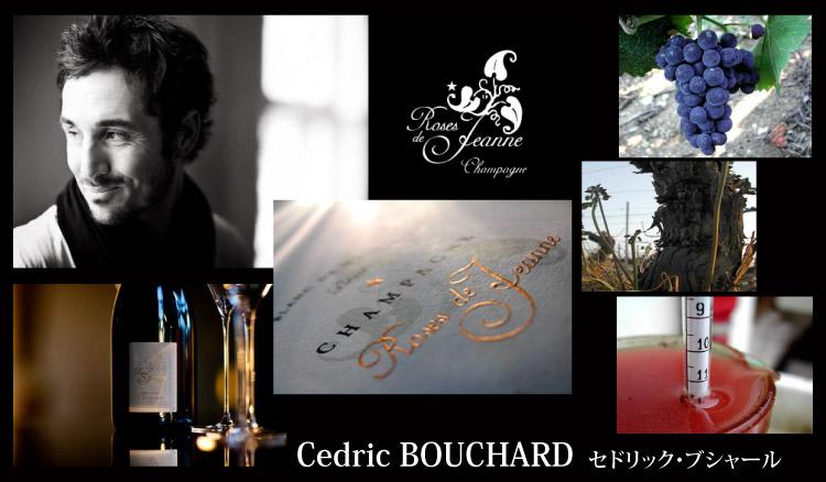 Cedric Bouchard セドリック・ブシャール