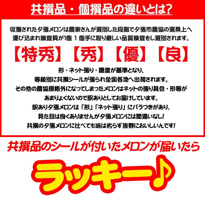 wkyum_011.jpg