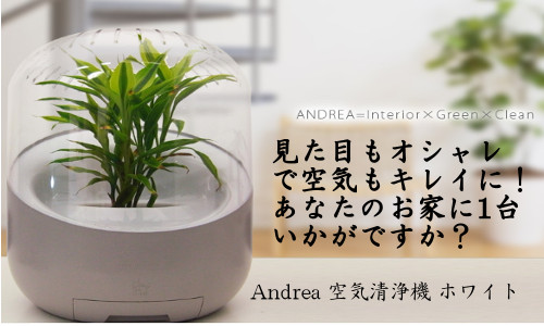 Andrea/����ɥ쥢 ���������� �ۥ磻�ȡ�